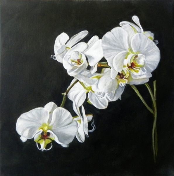 Orchid I